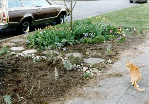 April 88 with my cat, Valene.  By then, I had planted two trees in the parking strip.
