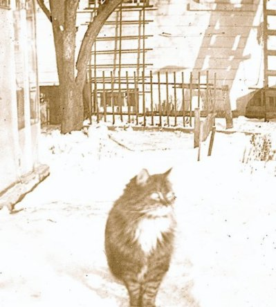 Skippy by the greenhouse on a snowy day.