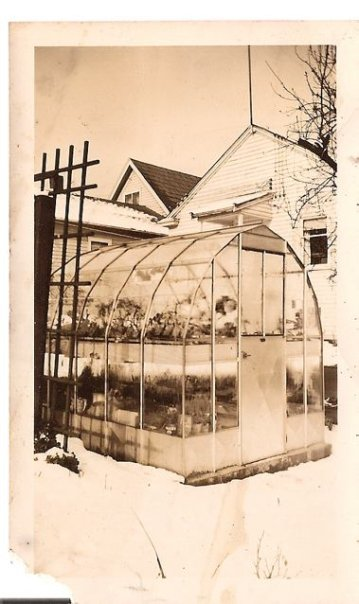 the greenhouse in early days...around 1950. Later it had shrubs at the front corners.