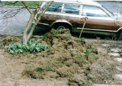 March of 1988; I don't remember why but I got the inspiration to dig up the parkingstrip and make a garden. No one else on my block had done so; in fact, it was still a rare thing in Seattle. I think I was inspired by Ann Lovejoy's columns in The Weekly.
