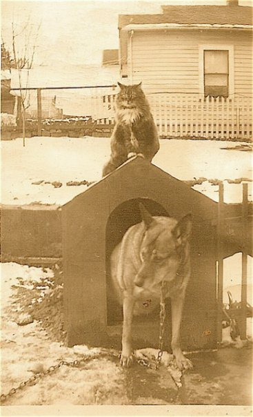 Penny and Skippy. I am amazed to see that the house one lot over was NOT stucco at the time. around 1950