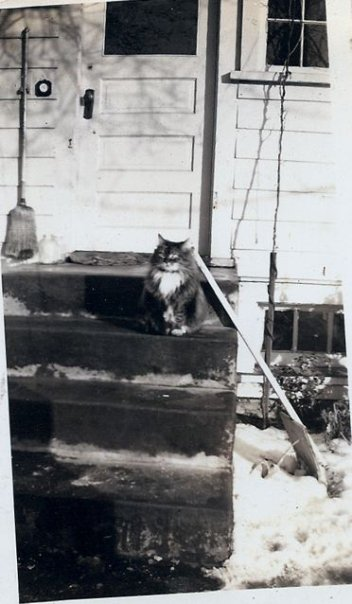 Skippy on the back porch before the house was painted red. around 1950