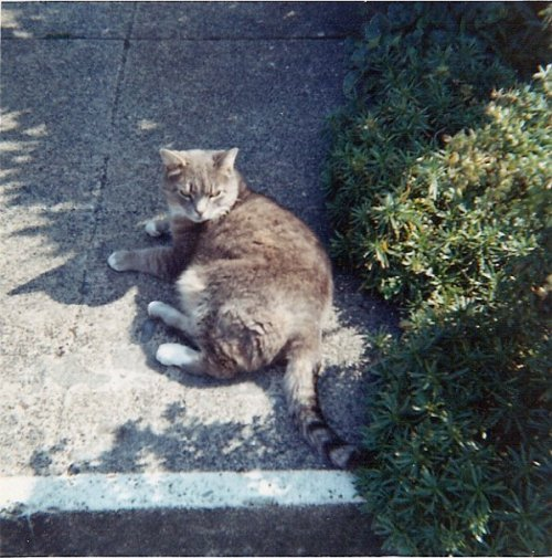 Squeaky on the warm front walkway, mid 60s