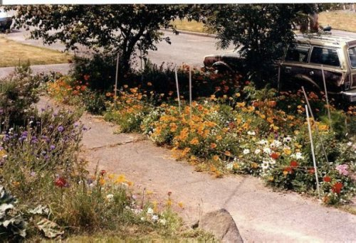 parking strip July 88