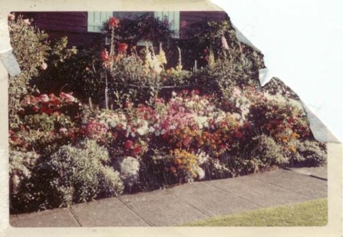 front garden in the 60s (torn photograph)