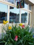 Jelly Bean tulips