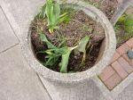 planter trauma