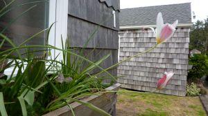 tulip windowbox