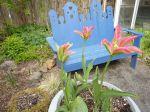 Tulips KBC
