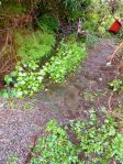 flooded path