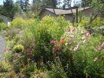 Marilyn's garden