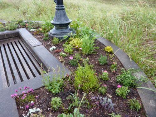 Lisa's planter