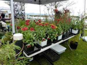 Saturday Market plant booth