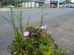 reasonably good Ilwaco planter