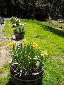 Casa Pacifica barrels in spring