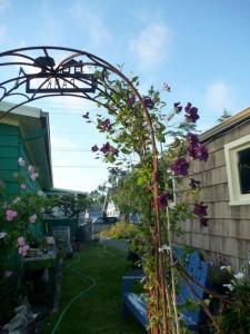 5 July, rose and clematis