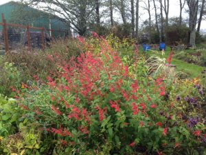 8 November, back garden