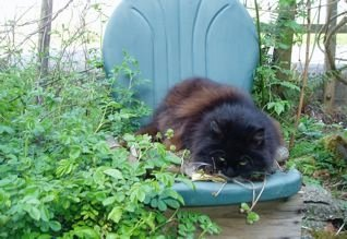 Maddy on a planted chair