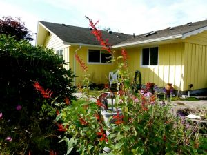 Cheri's yellow house w/red pineapple sage