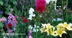 dahlia, sweetpeas, daylily