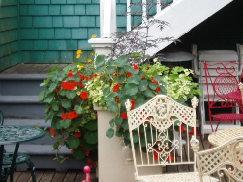 deck containers with nasturtium and 'Black Lace' elderberry