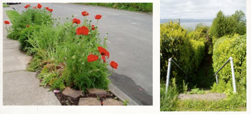 Oriental poppy parking strip and a path of deep mystery; a secret vegetable garden was behind the hedge to the left.