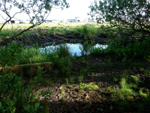seasonal pond in Mary