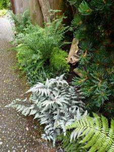 ferns silver, gold, and green