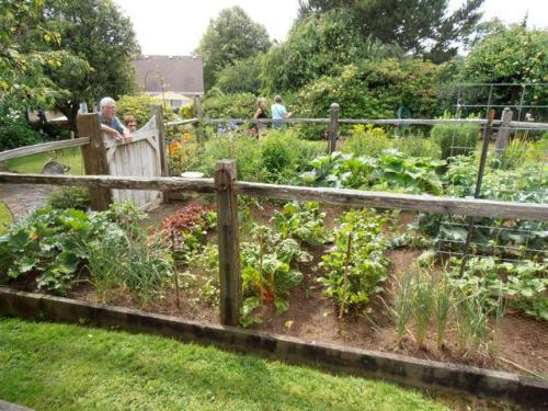 What a productive looking vegetable patch!