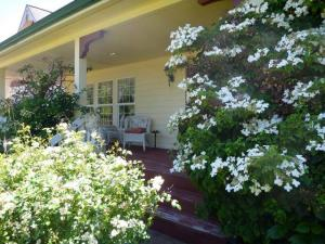porch with old shrubs