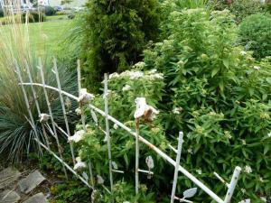 little fence