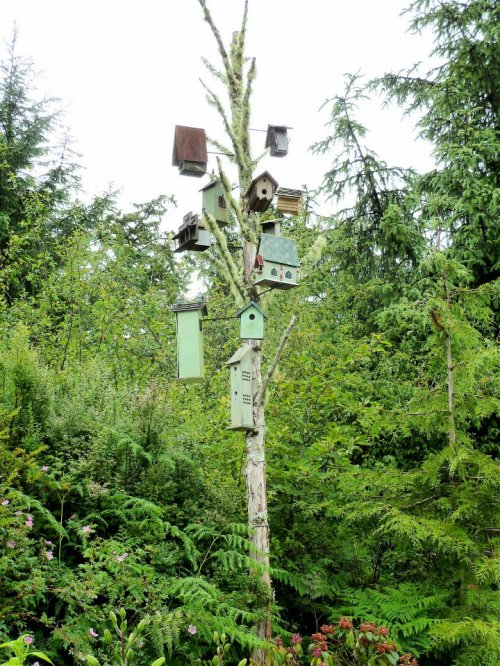 bird house pole