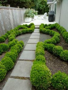 back garden: boxwood