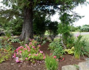driveway garden, 22 July
