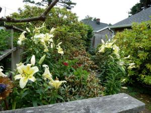 lilies inside the front gate