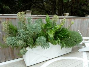 back deck, container with Euphorbia