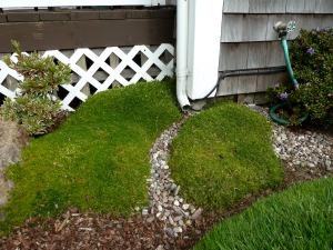 front garden detail