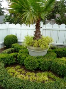 palm planter by front fence