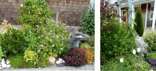 narrow curbside garden....and bindweed in training!
