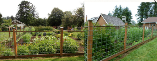 fence for vegetables
