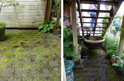 mossy patio, and under the stairs