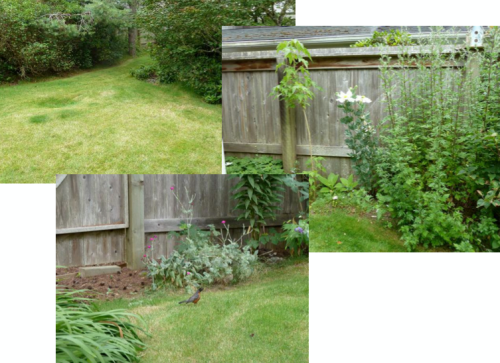 back yard with so many possibilities