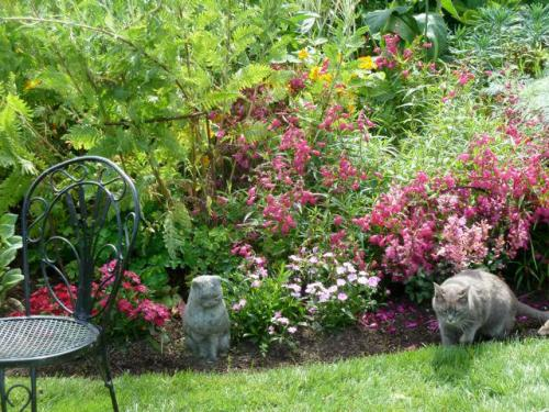 Smokey by the east flower bed.