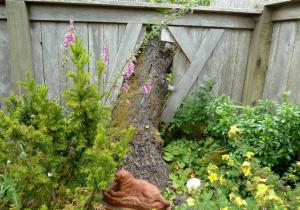 tree trunk in fence