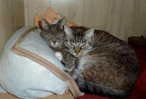 2 February: Smokey and Frosty taking refuge in our closet.