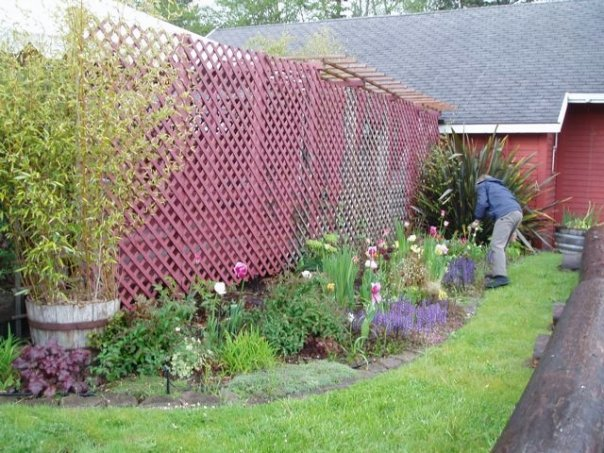 And here is is during the first year after we made a flower garden there.