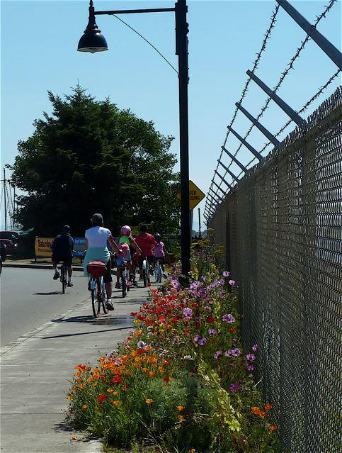 25 August, bicyclists on their way to Ilwaco Saturday Market