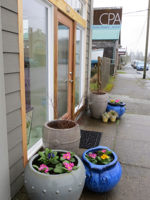 29 January: first signs of spring in Ilwaco at Jennifer Hopkins' accounting office