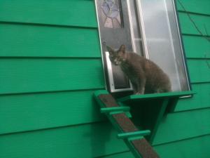 Smokey on the cat platform