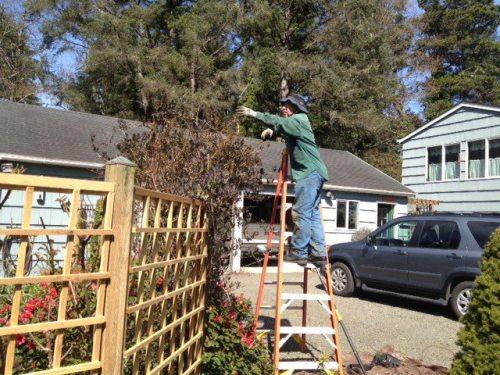 Allan pruning roses